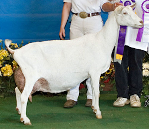 GCH Old-English Irish Lilly 2*M